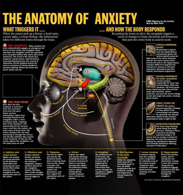 brain_stress-1